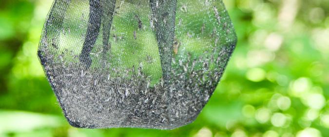 VetMedWien BG-Sentinelfalle c CarinaZittra VetmeduniVienna